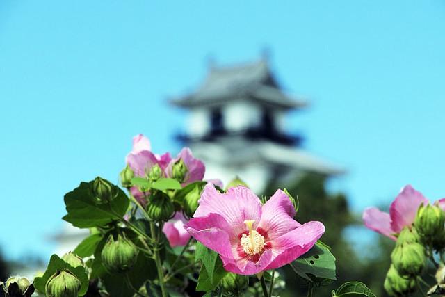100925_102934_掛川城