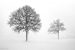 We Live and Die Together (Ben Heine) Tags: winter light wallpaper blackandwhite white inspiration snow cold tree art love nature beauty silhouette forest photography hope freedom evening countryside scenery energy die branch afternoon force friendship belgium belgique belgie image lumire live duo air hiver sneeuw apocalypse dream picture peaceful atmosphere lovers oxygen together libert freeze series snowing neige strength minimalism conceptual tomorrow immortal ensemble arbre froid imagery ecosystem vibration workflow luminosity platteland theartistery snieg platpays hesbaye creativecomposition benheine braives flickrunited samsungimaging nx10 benheinecom