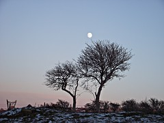 From a distance (Lune Rambler) Tags: old trees winter moon snow cold tree nature beauty natural endurance pinkskies lunevalley olétusfotos lunerambler tripleniceshot mygearandme mygearandmepremium mygearandmebronze mygearandmesilver mygearandmegold mygearandmeplatinum mygearandmediamond 4timesasnice 6timesasnice 5timesasnice 7timesasnice