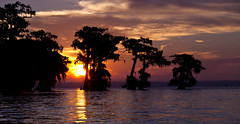 Sunrise at Atchafalaya (Tom Lowe @ Timescapes) Tags: tree water sunrise canon louisiana atchafalaya basin swamp canon70200 5dmarkii 5d2 basinkeeper