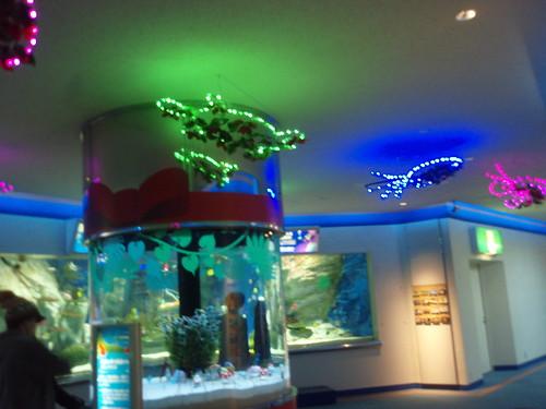 aquarium christmas lights