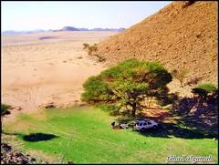 اللغفية (fahad algomah) Tags: ربيع رمال طلح
