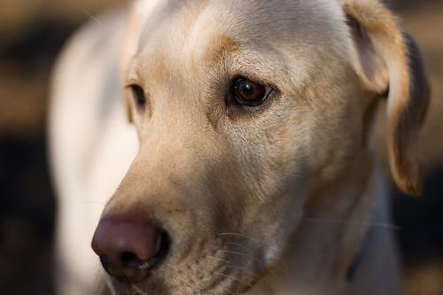 Lottie the dog