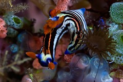 Bali diving Dive Concepts_075