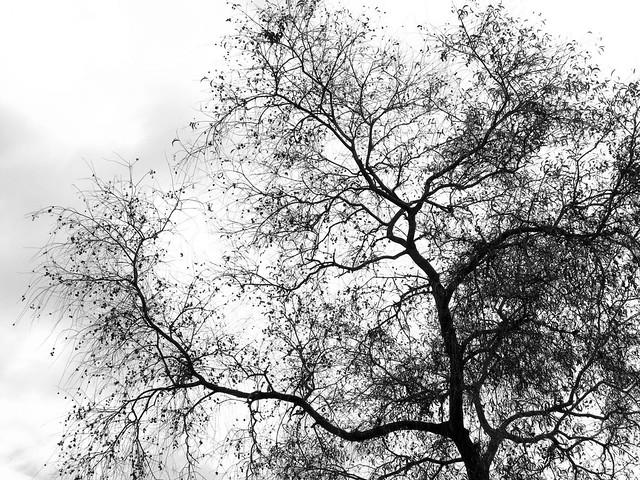 IMG_1965 Tree