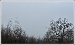 Is there anybody out there ? (##_Muri_##) Tags: trees white black fog alberi blackwhite grigio gray nebbia bianco nero bianconero desolation desolazione