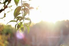 Good morning sunshine! (Mafalda de Simone) Tags: light sun sunshine foglie sunrise canon de eos 50mm tramonto simone bokeh d ds s f mm canon50mmf18 f18 18 50 sole terra dicembre luce mafalda 550 50mmf18 delle sfocato sfuocato 550d mafy insidie mafyds mafaldadesimone canoneos550d mafaldadesimoneit canoneos550dcanon50mmf18