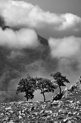 Messaggi del cielo - Messages from the sky (Explored) (Immacolata Giordano) Tags: tree fog alberi clouds nikon nuvole nuvola bn albero montagna abigfave d5000 coccovello montecoccovello