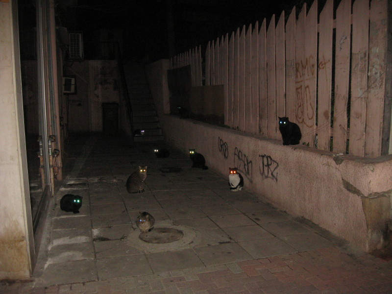 06-01-2011-cats
