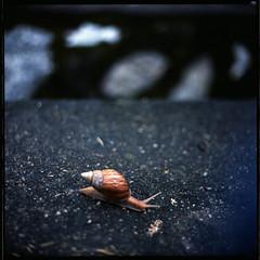 (19/77) Tags: slr film snail malaysia 1977 negativescan kiev88 kodakektacolorpro160 autaut canoscan8800f arsat80mmf28 myasin
