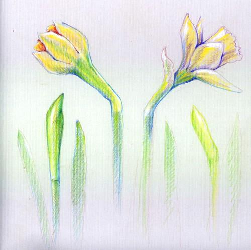 Botanic drawings