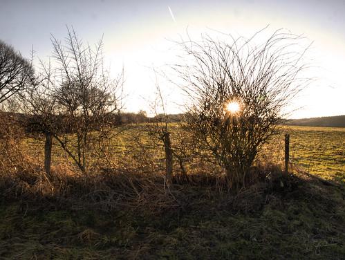 Sonne hinter Strauch