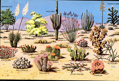 Sonoran Desert Plants (S_Crews) Tags: plants desert postcard cartoon sonorandesert sonorandesertplants