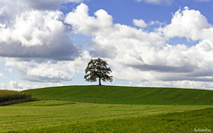bavarian landscape (lichtauf35) Tags: tree clouds bluecloudysky bavaria green landscape loneley 50favs 1000views lichtauf35
