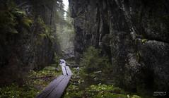Orinoro ravine -1462 (>>Marko<<) Tags: nature outdoor luonto suomi finland canon valokuvaus pitkospuut rotko gorge gulch chasm ravine moss mustinmki leppvirta orinoronrotko