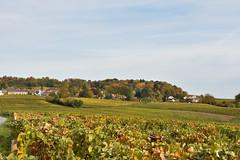 Le vignoble champenois (F) (TICHAT10) Tags: champagneardenne france marne arbres automne vignes chenay champagne vignoble coth sunshine