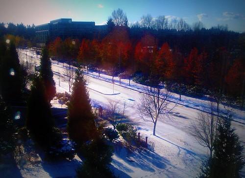 November Freeze 2010