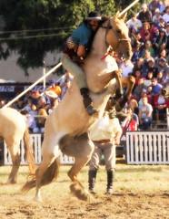 Pegado a las clinas... (Eduardo Amorim) Tags: horses horse southamerica caballo uruguay cheval caballos cavalos prado montevideo pferde cavalli cavallo cavalo gauchos pferd hest hevonen chevaux gaucho  amricadosul montevidu hst uruguai gacho  amriquedusud  gachos  sudamrica suramrica amricadelsur  sdamerika jineteada   americadelsud gineteada  americameridionale semanacriolla semanacriolladelprado eduardoamorim iayayam yamaiay semanacriolladelprado2010