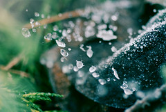 . (plexus solaire) Tags: morning november winter snow cold macro ice nature drops crystals spiderweb universe