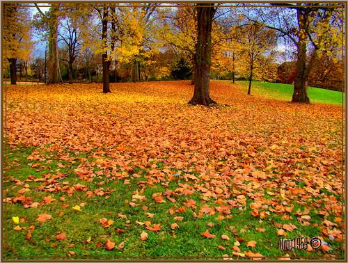 Natures red carpet...........