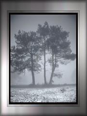 0867 Pinheiros (orxeira) Tags: light shadow gelo luz branco sombra quadro neblina rvore frio outono 2010 geada nvoa pinheiro trs brtema cadro 0867 nboa orxeiradecembro10 decembro2010 0867867