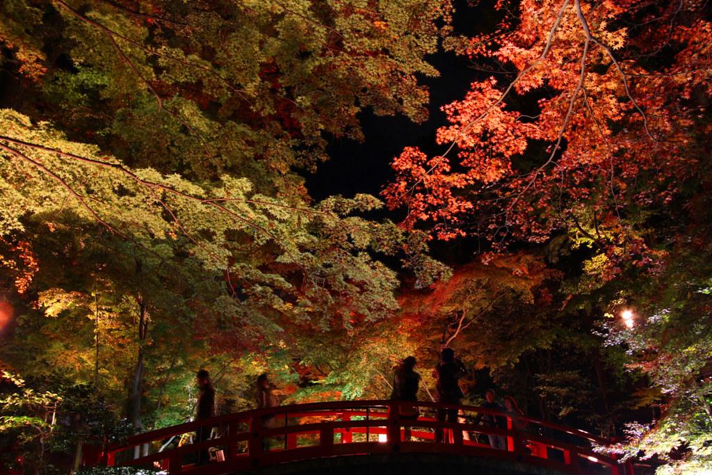 Kitanotenmangu Red Leaf Lightup 2010 (2)