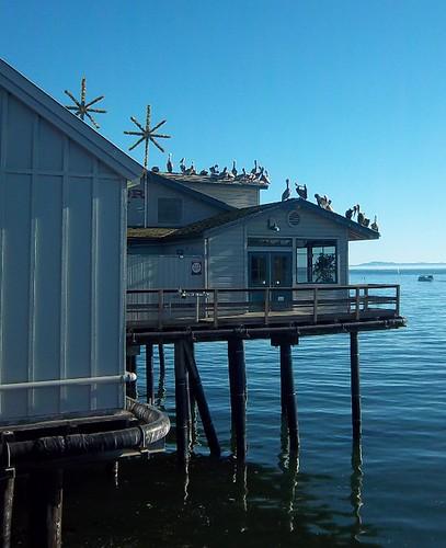 Stearn's Wharf 3
