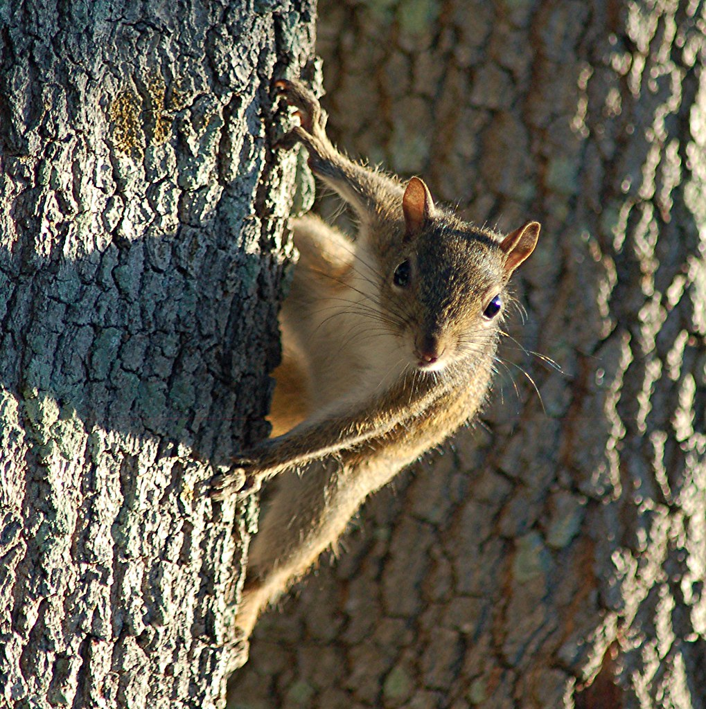 Baby Squirrel in shadowy last rays on sunlight
