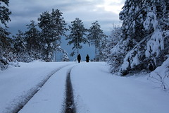 (Sinan Saldran) Tags: road trees winter people snow silhouette flickr gallery award siluet yol kar k insanlar aalar kartpostal