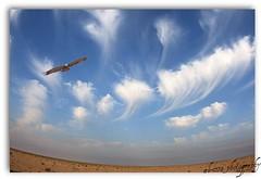 Phoenix (falconer-kw) Tags: fisheye