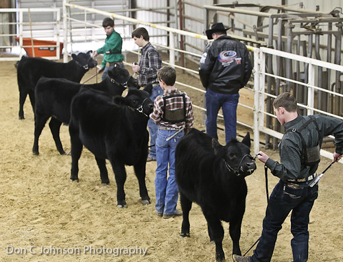 Terrell FFA Holiday Heifer Show-2281