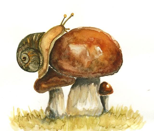 kroliki art snail on mushroom