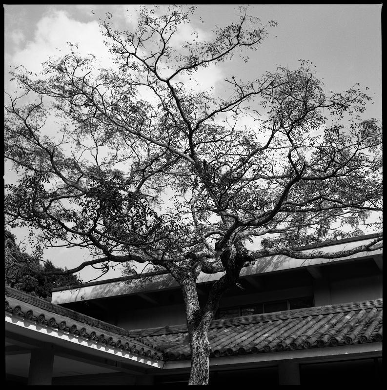 鎌倉 散歩