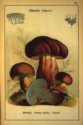 003-Allgemein verbreitete eßbare und schädliche Pilze 1876- Wilhelm von Ahles
