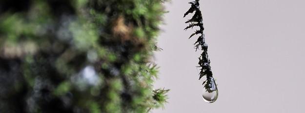 dripping moss 625