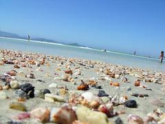Inclinando... (Biah Bizzarra) Tags: brazil macro praia mar cabo frio conchas