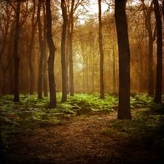 [フリー画像] 自然・風景, 森林, 樹木, 怒る, 口を開ける, 201104061900