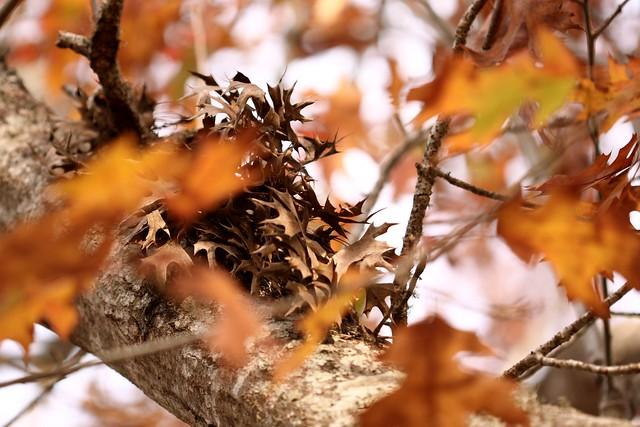 cluster of brown leaves