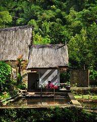 Kampung Naga II