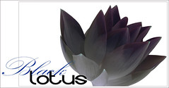 Black Lotus - BlackLotus-29-0700 (Bahman Farzad) Tags: flowers black flower macro yoga poster design peace lotus relaxing peaceful meditation therapy lotusflower lotuspetal blacklotus lotuspetals lotusflowerpetals lotusflowerpetal