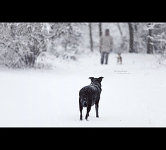 The Stand Off [Explored] (Dkillock) Tags: winter people dog snow david cold canon eos prime dof open bokeh mark magic canine full explore ii frame 5d snowing f2 usm fullframe ef 135mm mkii standoff confrontation wideopen llens explored canonef135mmf2lusm killock 5dmarkii 5d2 5dmkii magicprime dkillock davidkillockphotography