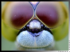 "Explored:  ""Facial Symmetry"" (lennox_tpc) Tags: world wild macro nature amazing dof bokeh wildlife insects ps finepix fujifilm discovery tpc lennox tipidpc s200exr s205exr lennoxtpc"