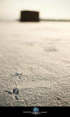 Tracks (Oooah!) Tags: lake snow ice water wisconsin 35mm prime frozen nikon madison shanty shack icefishing lakemonona danecounty birdtrack d5000