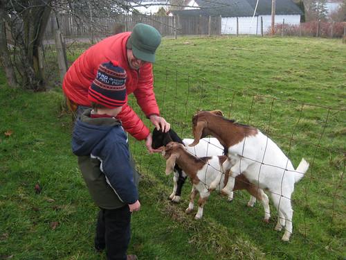 Vashon goats