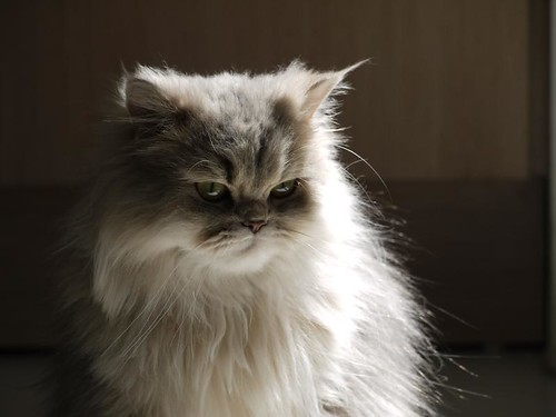 Unimpressed kitten