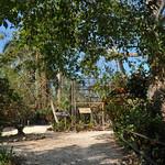 20101225_BZE Zoo_King Vulture_1608.jpg thumbnail