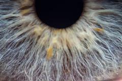 Cheeser359's eye again (Stephen Begin) Tags: macro eye ottmeetupjan2011 cheeser359