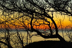 Tangled sunset (fiammetta53) Tags: sunset sardinia blueribbonwinner sarchittu supershot cuglieri fiammetta53