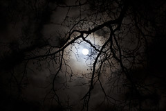 - 18/365 - [Explore] (Pieter D) Tags: moon night clouds branches 365 project365 pieterd mostly365 3652011 365the2011edition