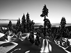 Bonded with Seymour (Christopher J. Morley) Tags: trees winter bw rescue mountain snow vancouver snowshoe shadows bc thankyou accident anniversary volunteers hike alive seymour sar remembering wanderung nsr alw achromatic